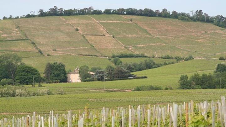 Beaujolais Wine Region Vineyard.JPG