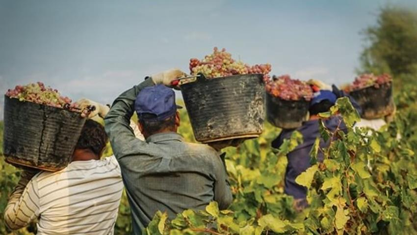 Spanish Winemaking.JPG (1)