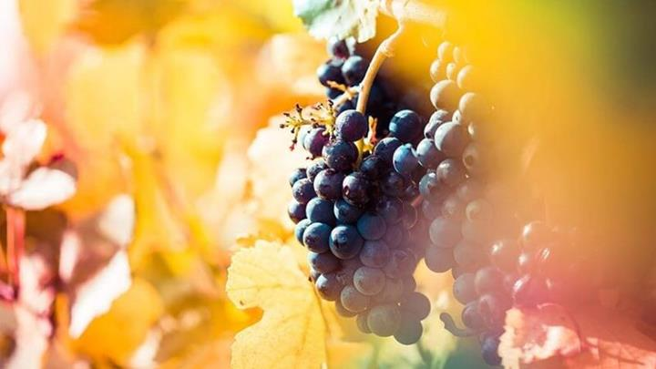 colourful-wine